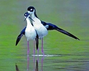 Everglades National Park scheduled to host Big Day Birding Adventures