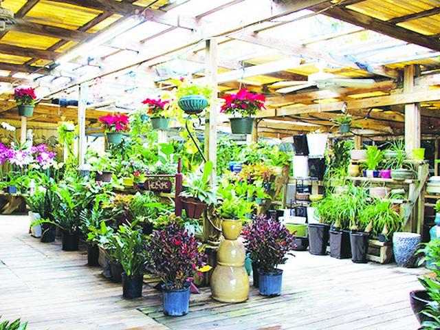 Hirni\'s Wayside Garden Florist is a much-loved oasis in Pinecrest ...