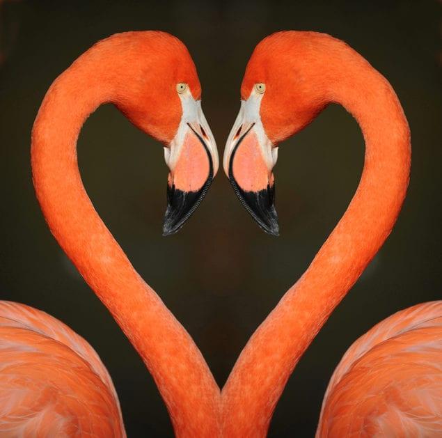 'Sex & the Animals' promises wild time at Zoo Miami, Feb. 3